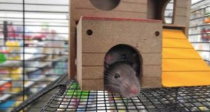Rodent-proofing your house